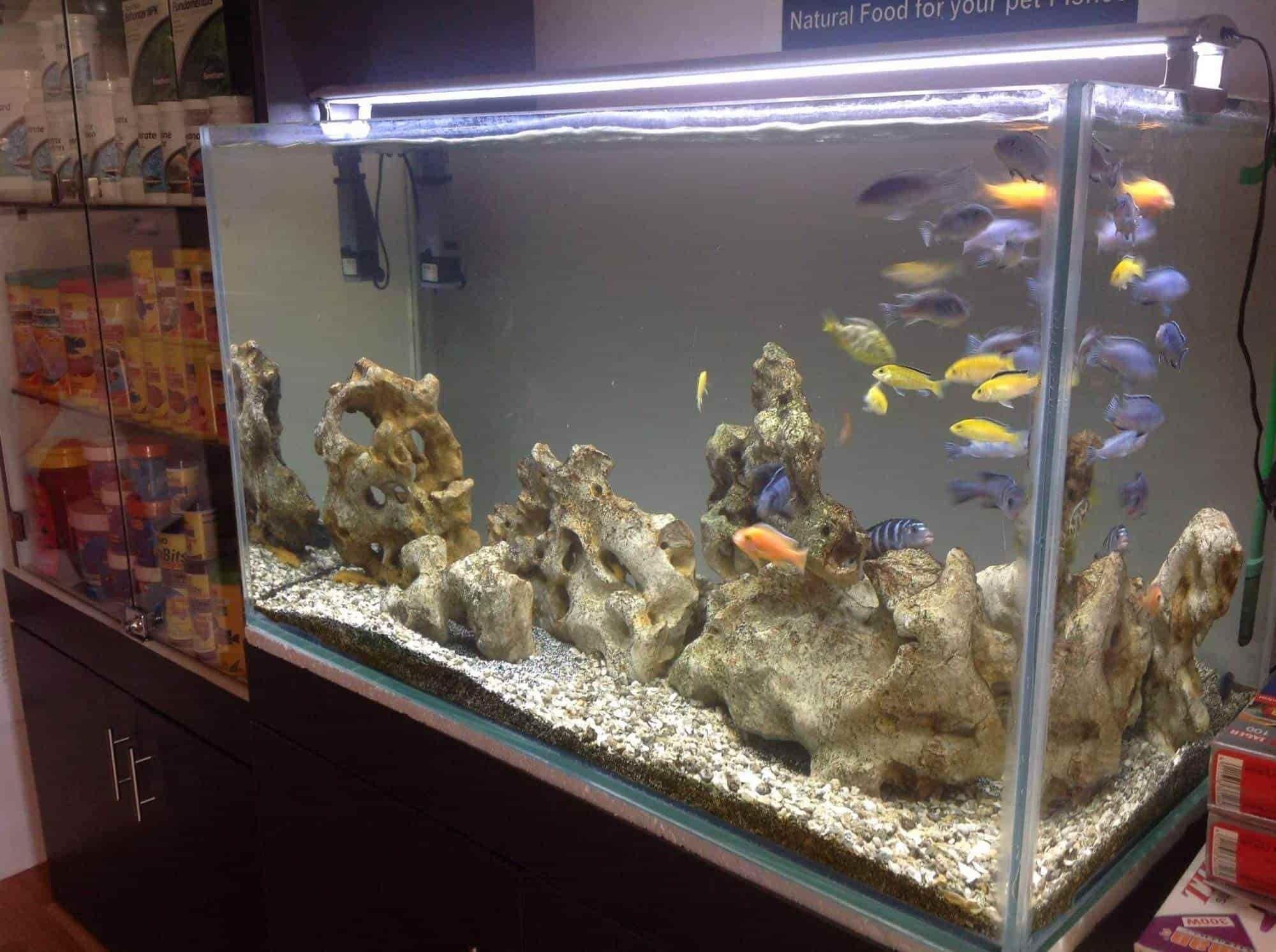 wet pets aquarium kuvempunagar pet shops for birds in mysore