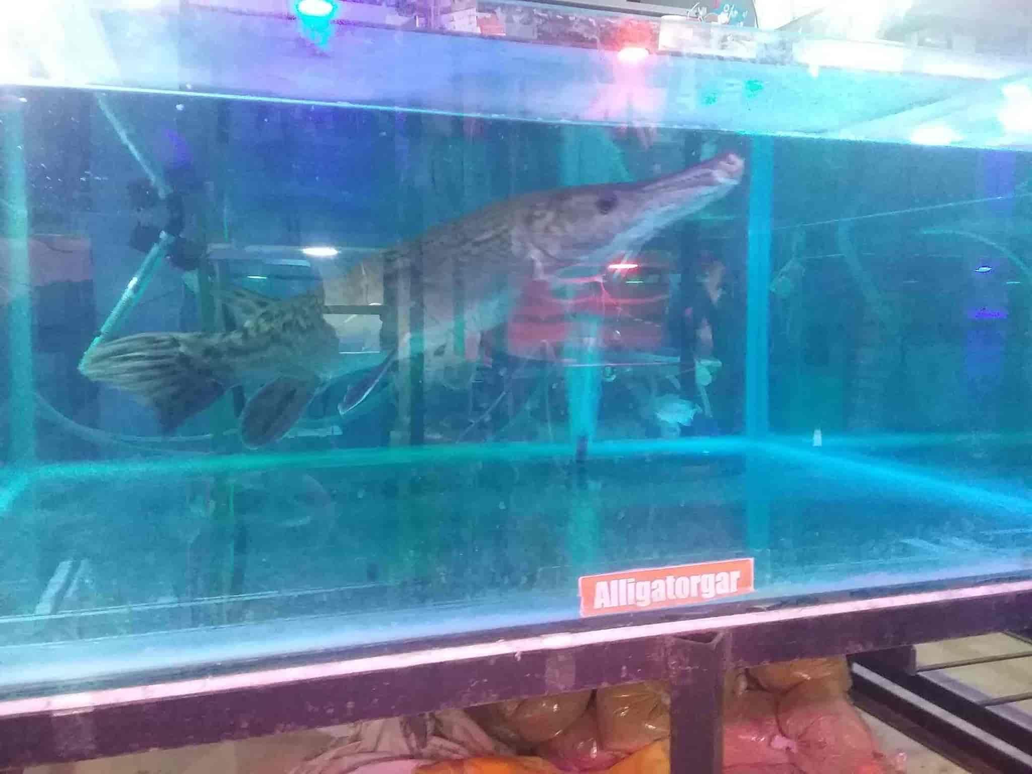 aqua garden aquarium and fish spa vijaynagar 2nd stage pet shops