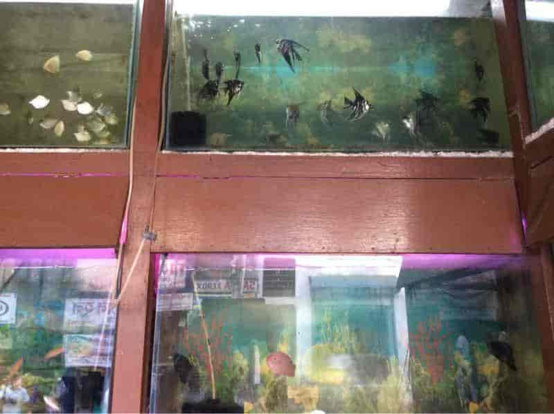 Marine Drive Krishnanagar Aquarium Fish Dealers In Nadia Justdial