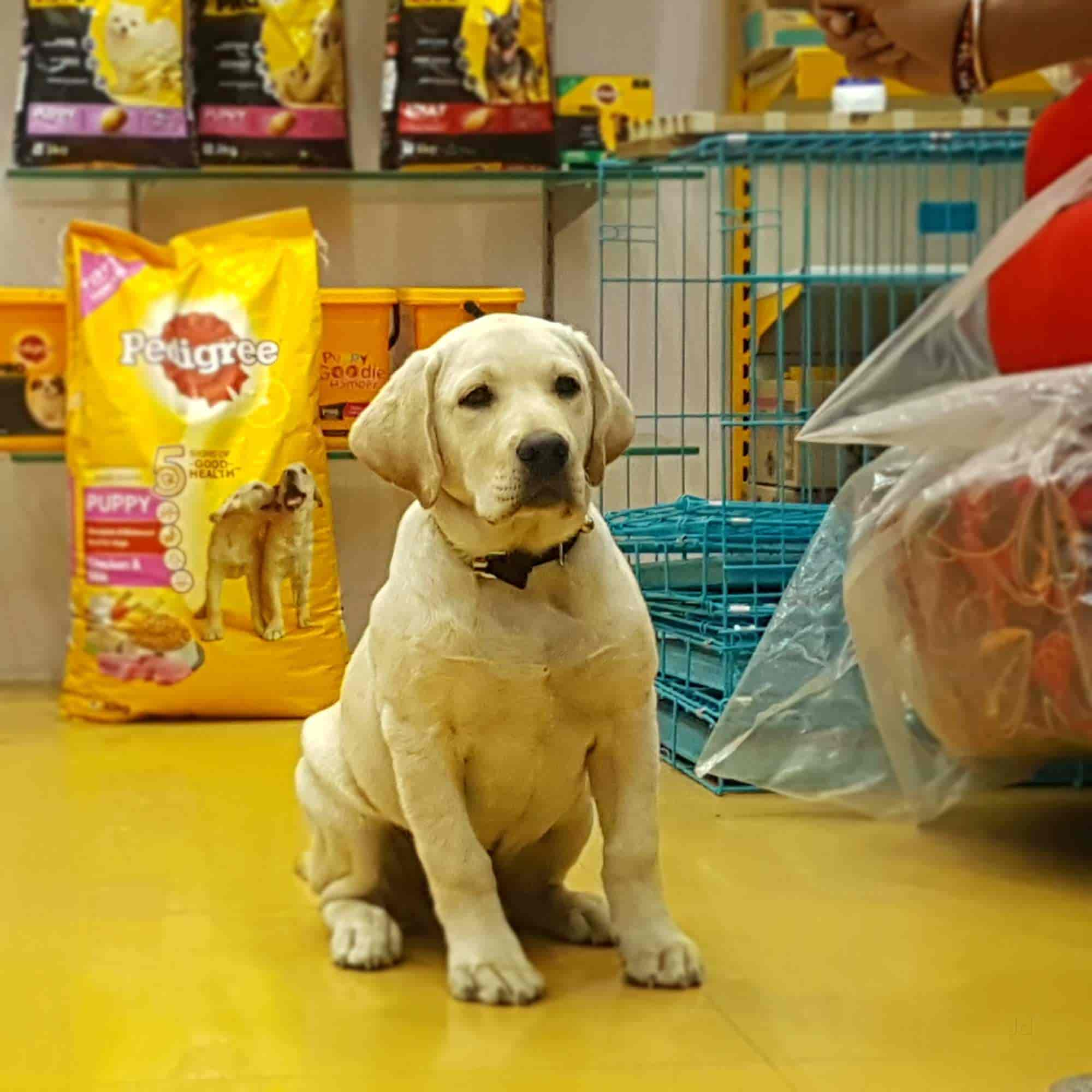 Dogz Planet, Gokul Peth - Dog Trainers in Nagpur - Justdial