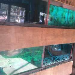 Taj domestic birds and fish supplier, Mominpura - Pet Shops