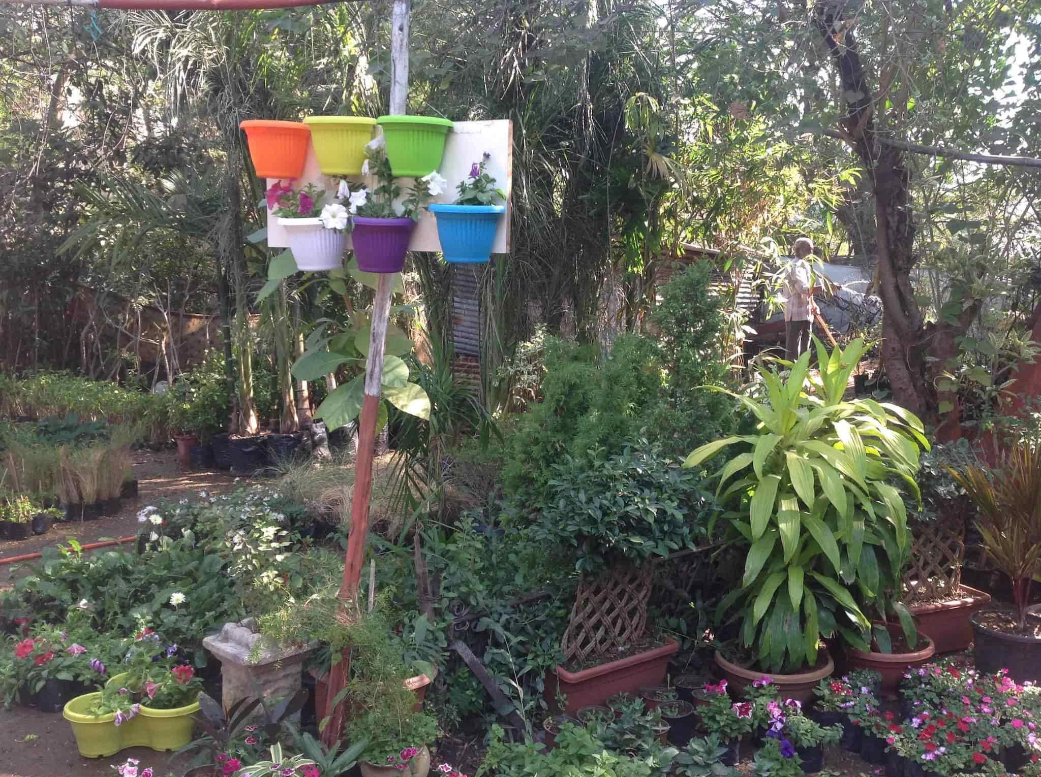 Rose Glen North Dakota ⁓ Try These Plant Nursery Near Me In