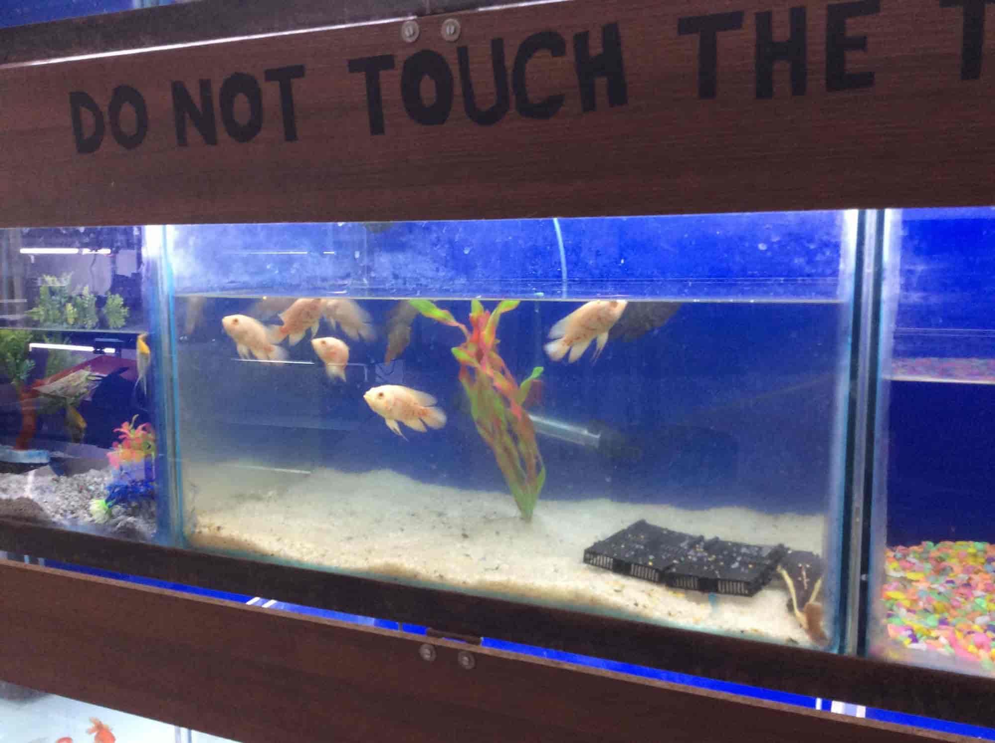 Ritz Fish Aquarium & Pets Shop Khamla Aquariums in Nagpur Justdial