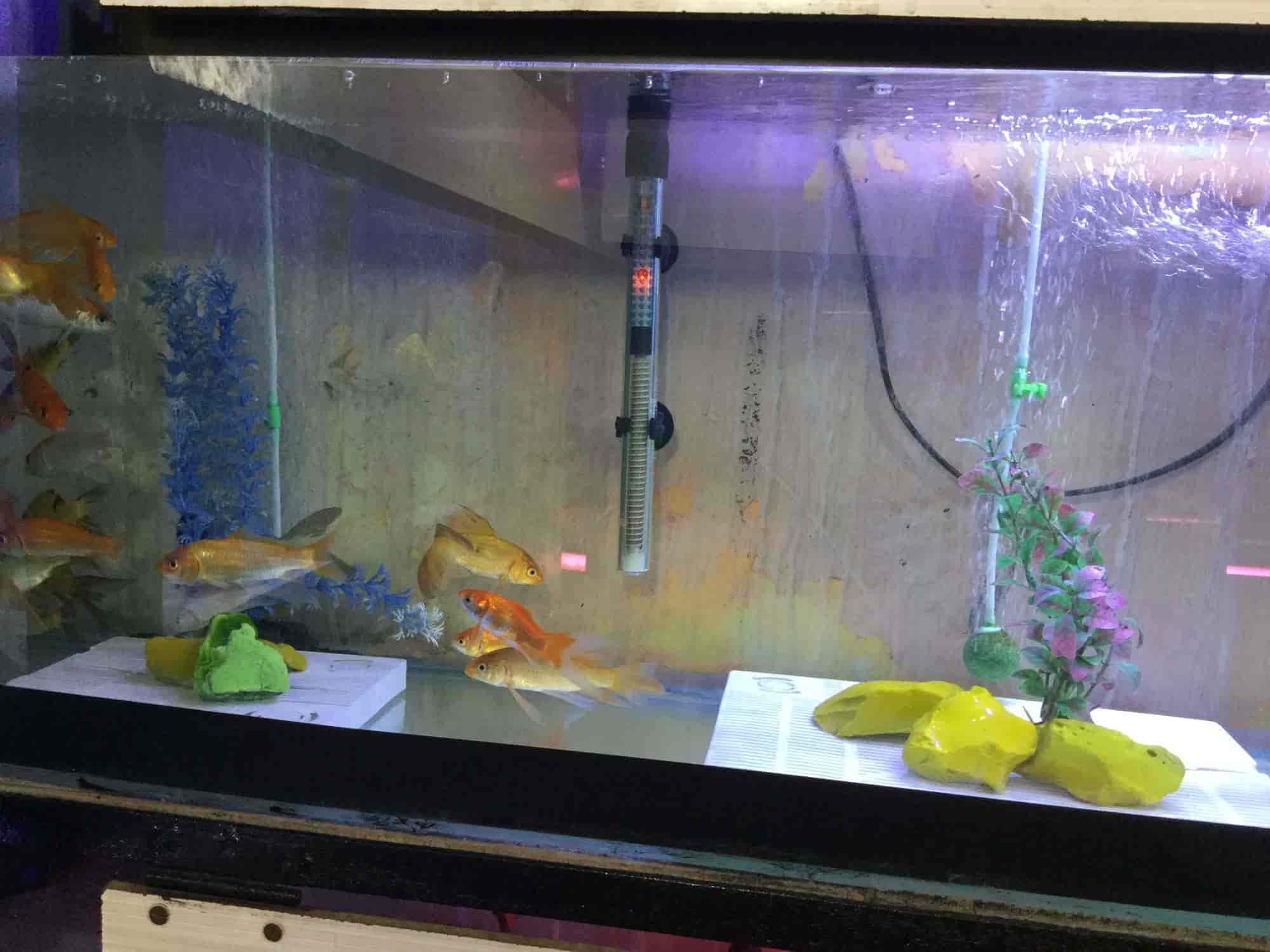 Fish Home Aquarium Kamal Chowk Pet Shops in Nagpur Justdial