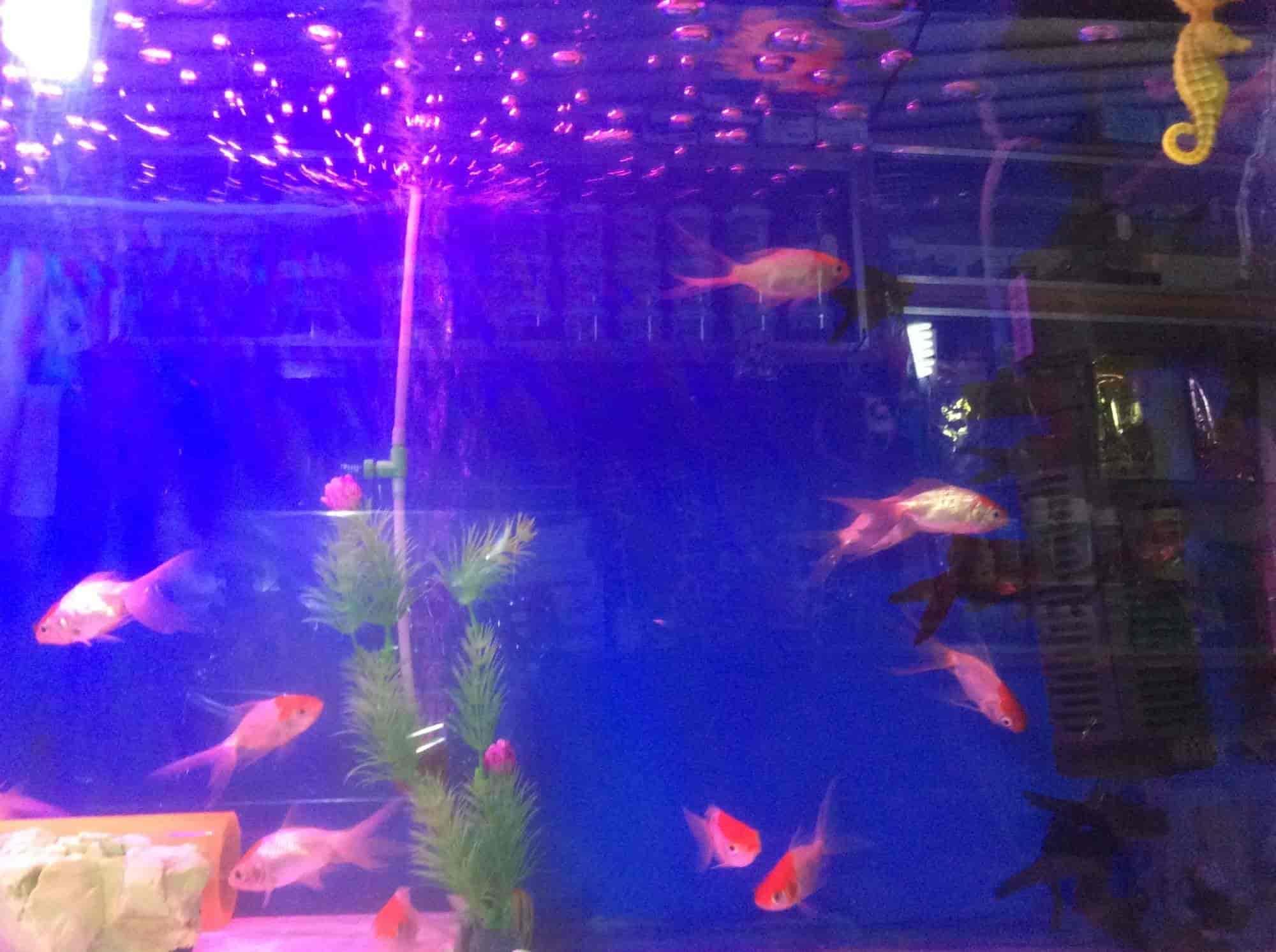 Fish Home Aquarium Kamal Chowk Aquariums in Nagpur Justdial
