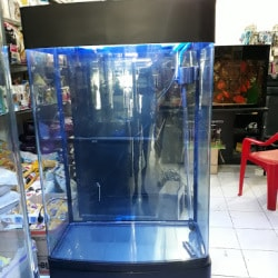Fins Aquariums And Pets Samarth Nagar Pet Shops In Nashik Justdial