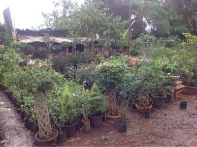 Plant Nursery Paradise Photos Satpur Nashik Nurseries