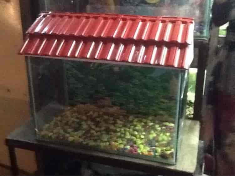 fish home aquarium photos shalimar nashik pictures images