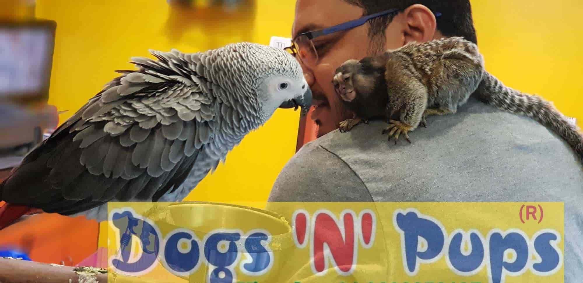 Dogs N Pups, Nerul - Pet Shops in Navi Mumbai, Mumbai - Justdial
