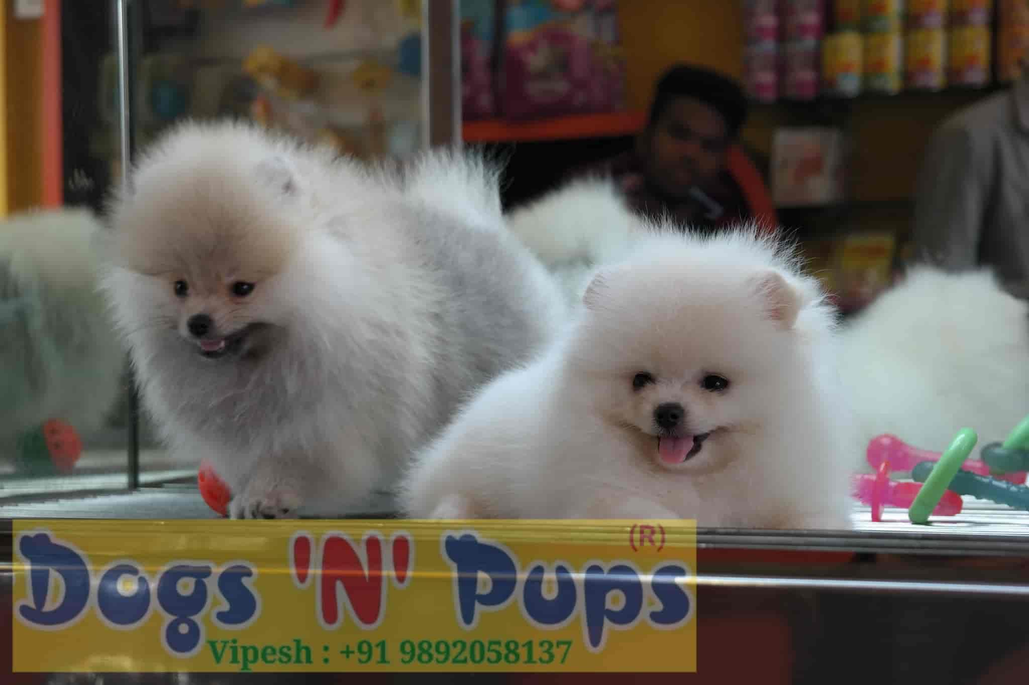 Dogs N Pups Nerul Pet Shops In Mumbai Justdial