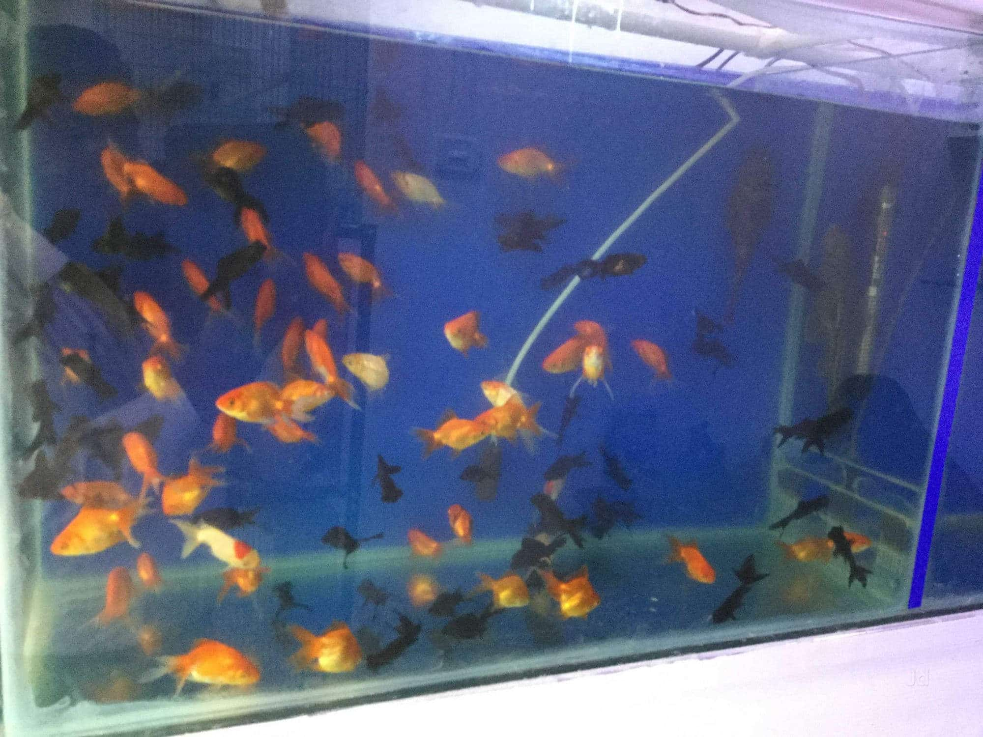 Siraj Aquariums, Trunk Road - Aquariums in Nellore - Justdial