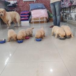 Quality Pet Shop, Sector 93 - Pet Shops For Dog in Noida, Delhi