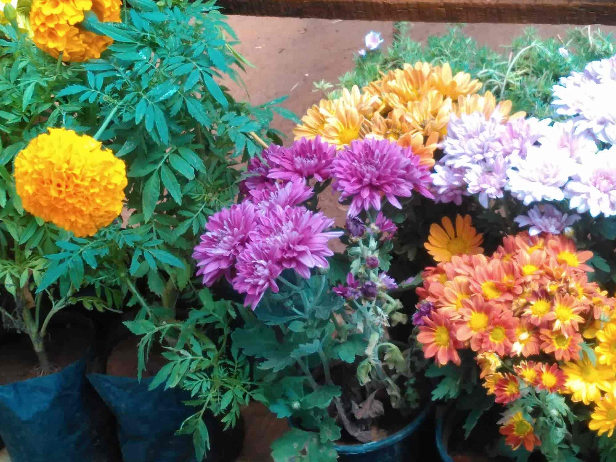 Sithara Flower Farms Photos, Lake Road, Ooty - Flower Manufacturers