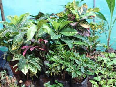 Plant Nursery New Leaf Closed Down Photos Virar West Mumbai