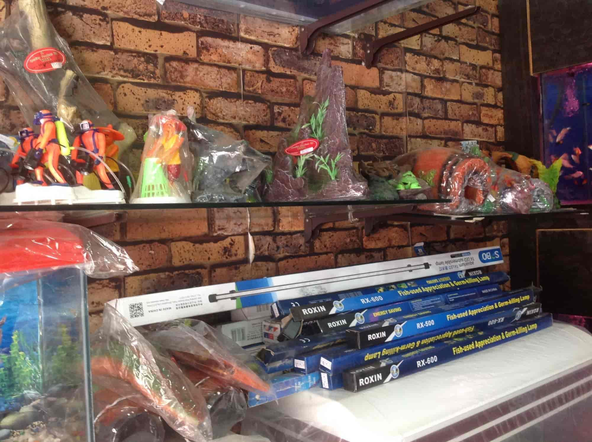 Anand Aquarium Model Town Aquarium Fish Dealers in Panipat Justdial
