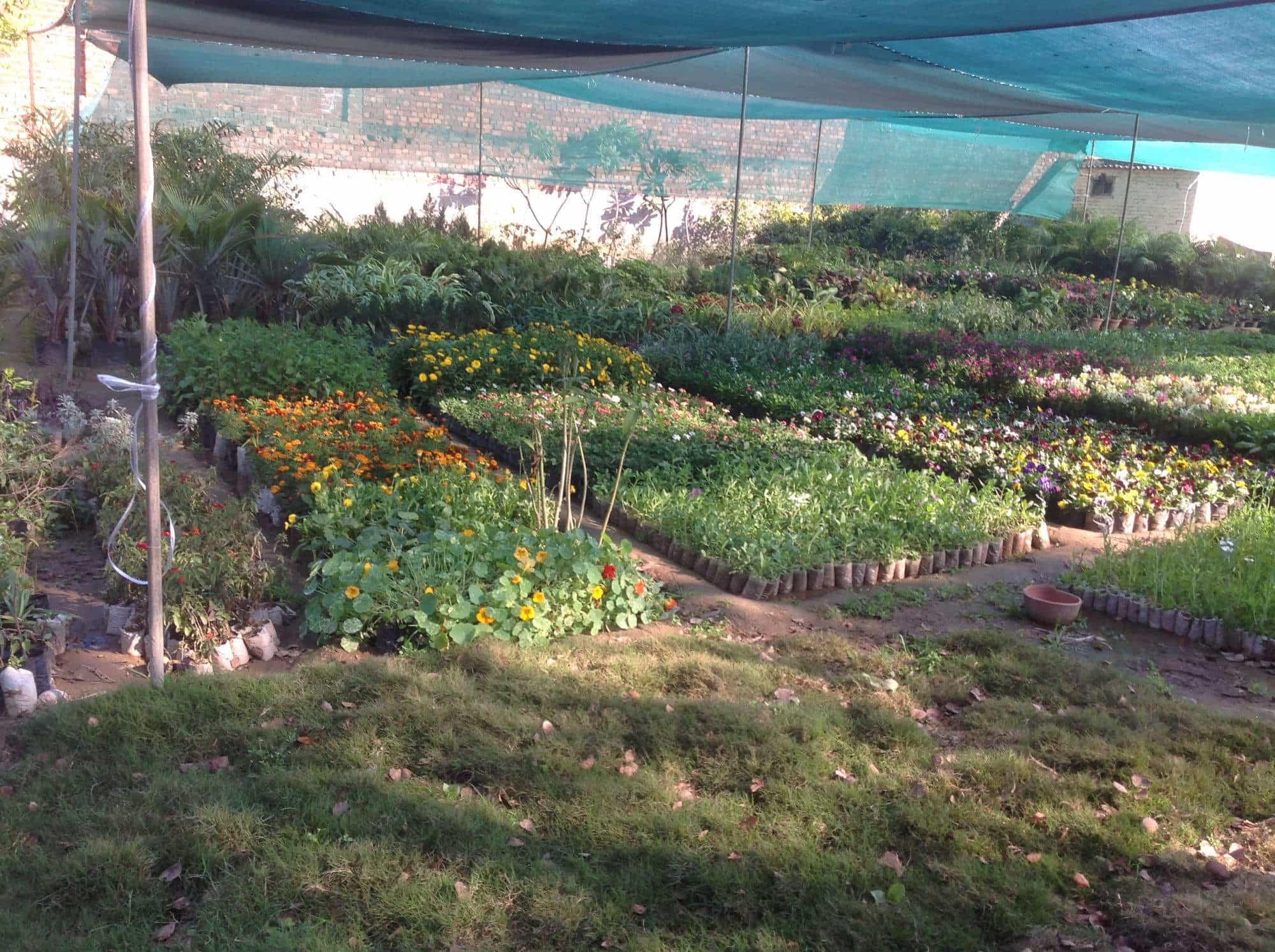 Green World Nursery Photos Majithia Enclave Patiala Pictures