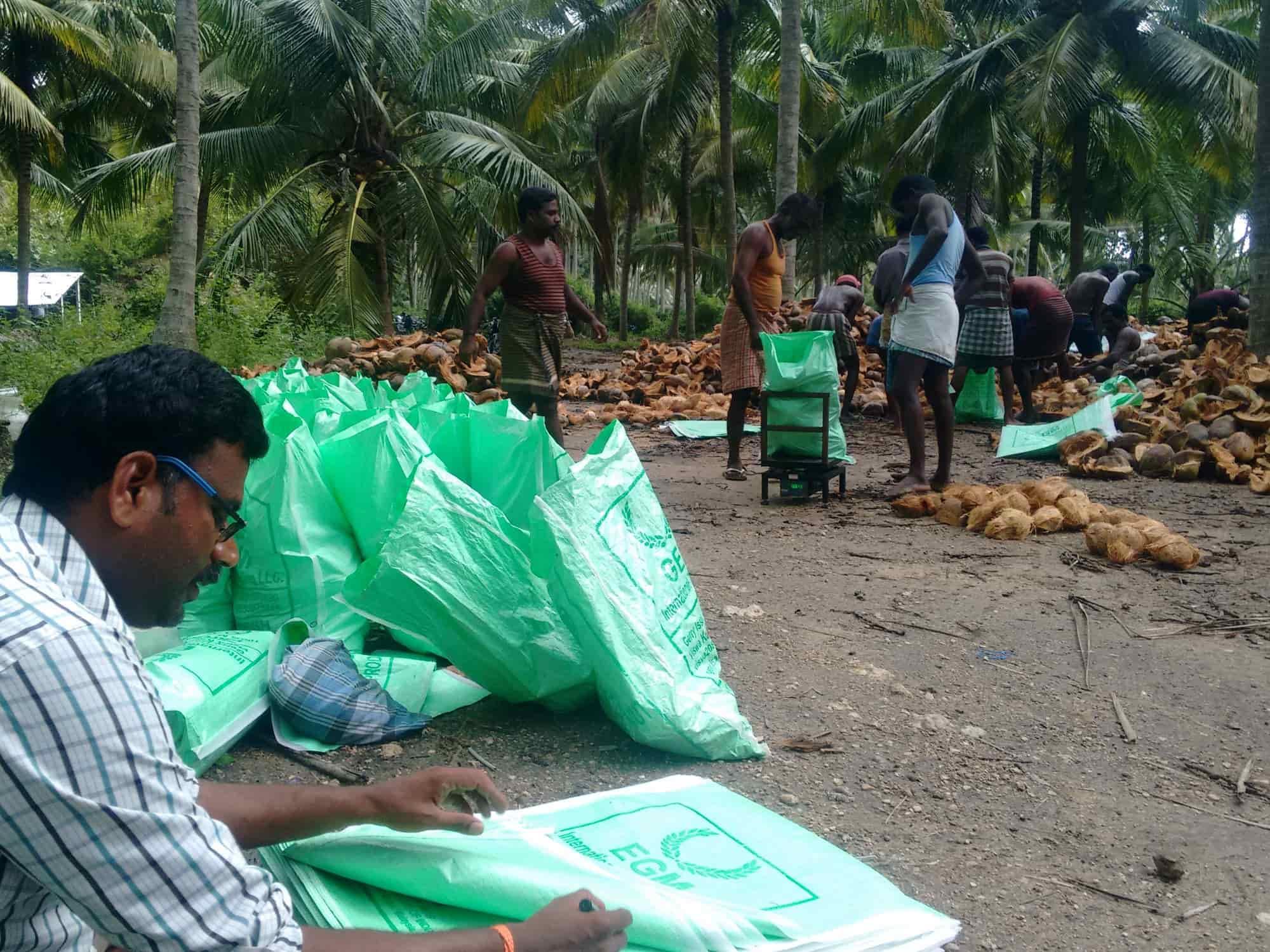Indian Fresh Pollachi Coconut Export Photos, Jeeva Nagar