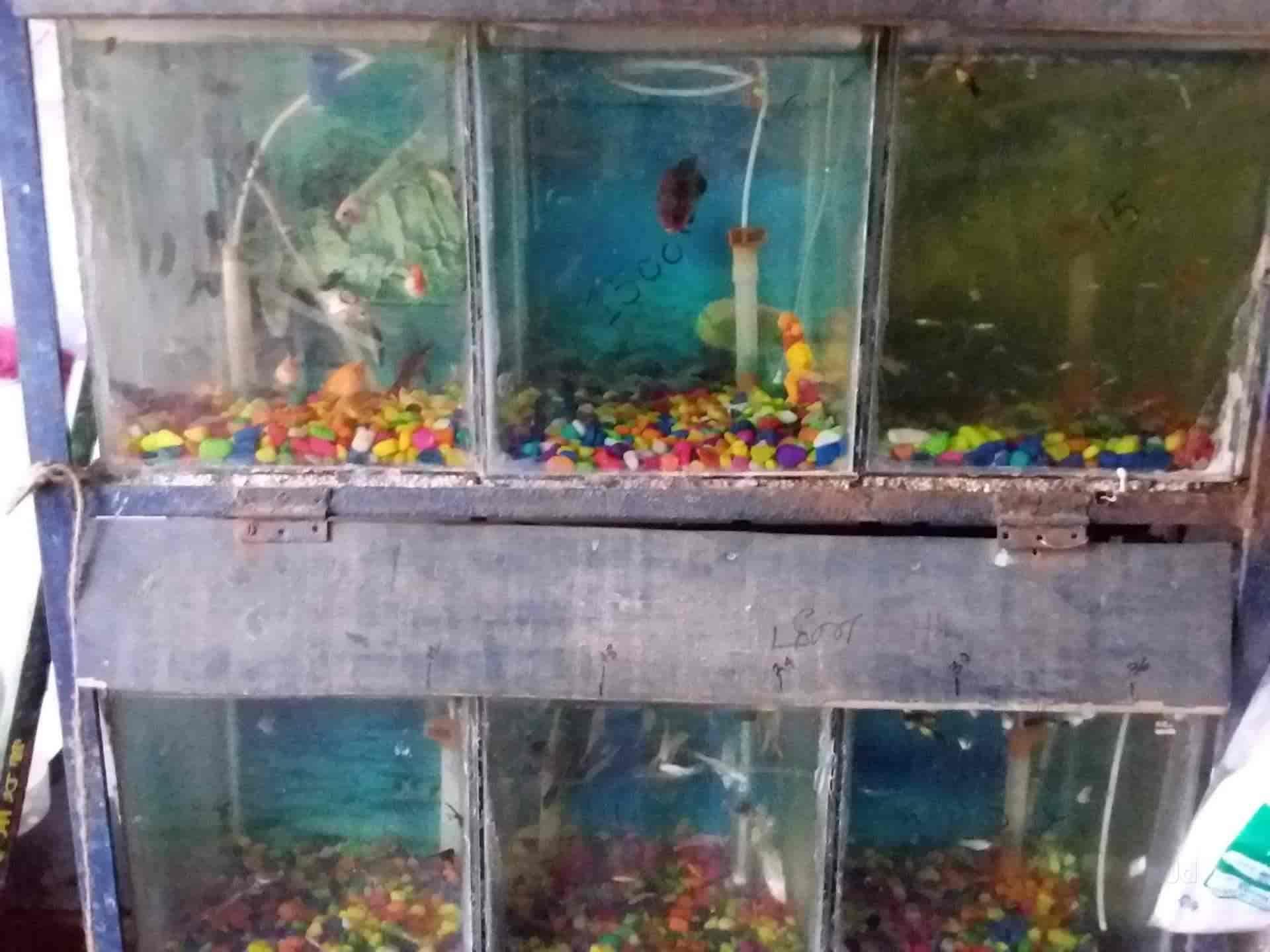 viji aquarium pet center moolakulam pet shops in pondicherry