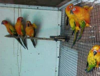 Pet Birds Photos, Uttam Nagar Khadakwasla, Pune- Pictures