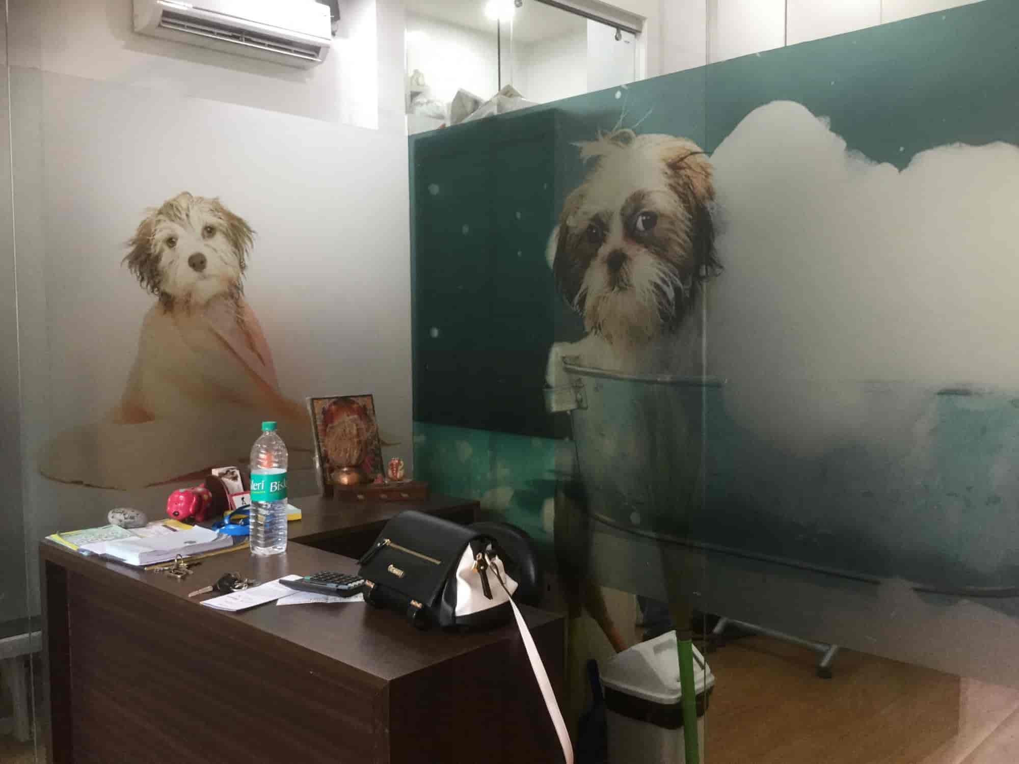 Woof N Wag, Koregaon Park - Dog Grooming Services in Pune - Justdial