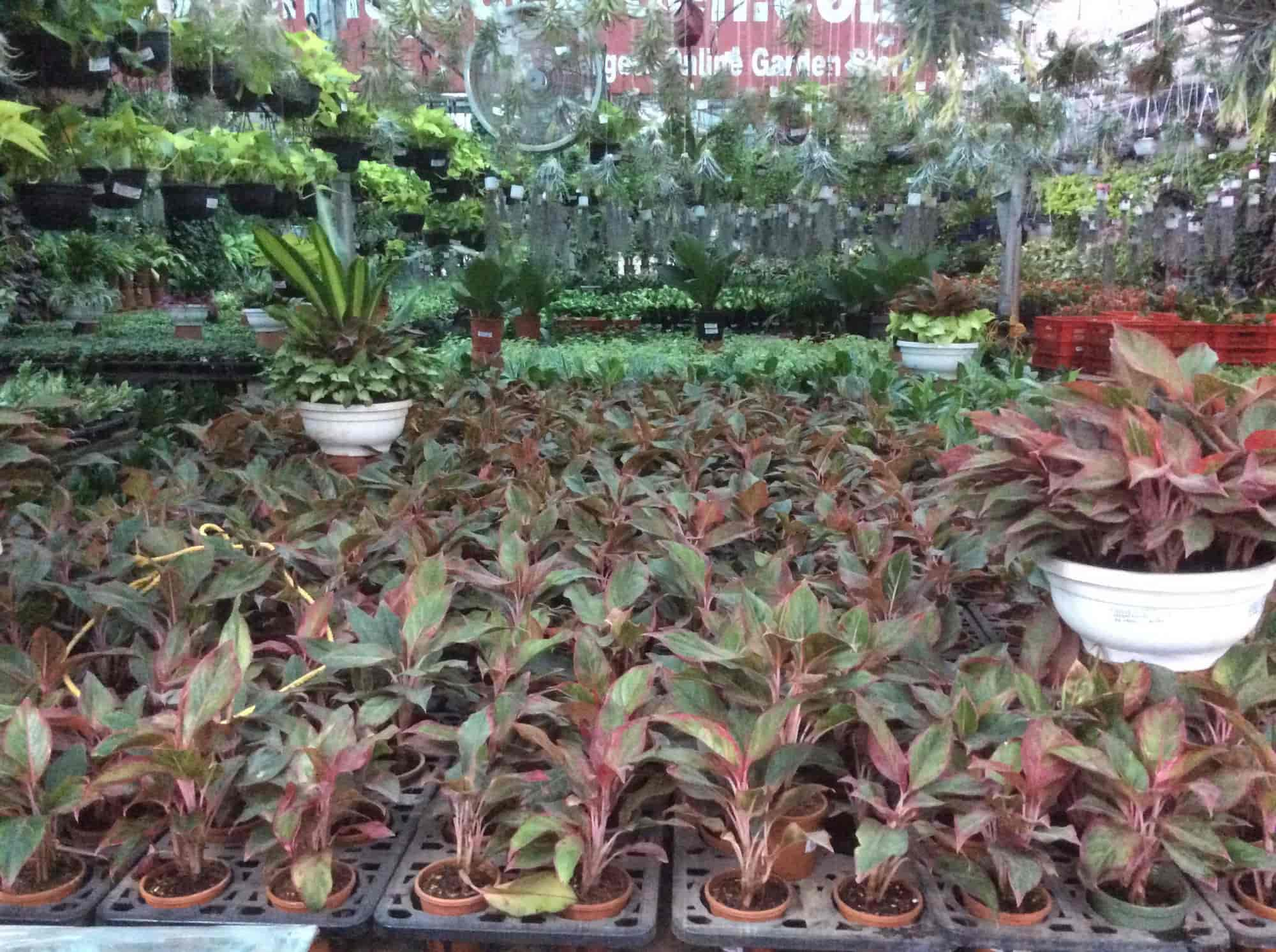 Sanjay Nursery Hadapsar Plant Nurseries In Pune