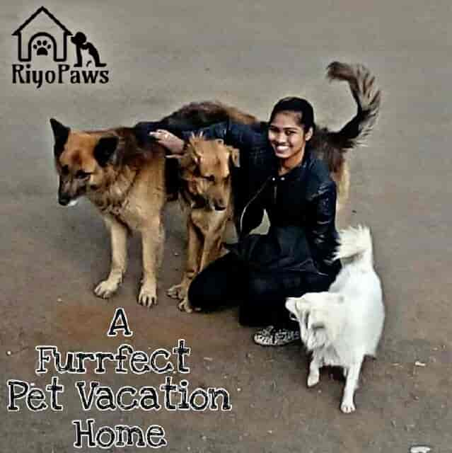 pet care taker riyopaws pet boarding photos moshi pune dog hostels
