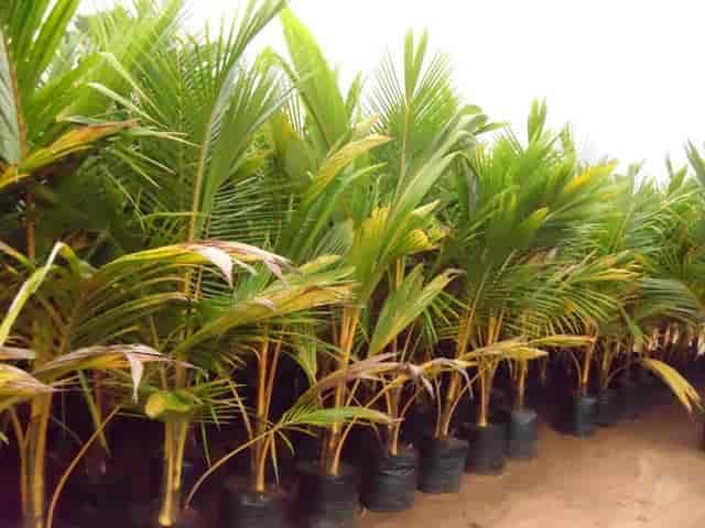 Greenworld Nursery Plant Nurseries In Rajahmundry Justdial