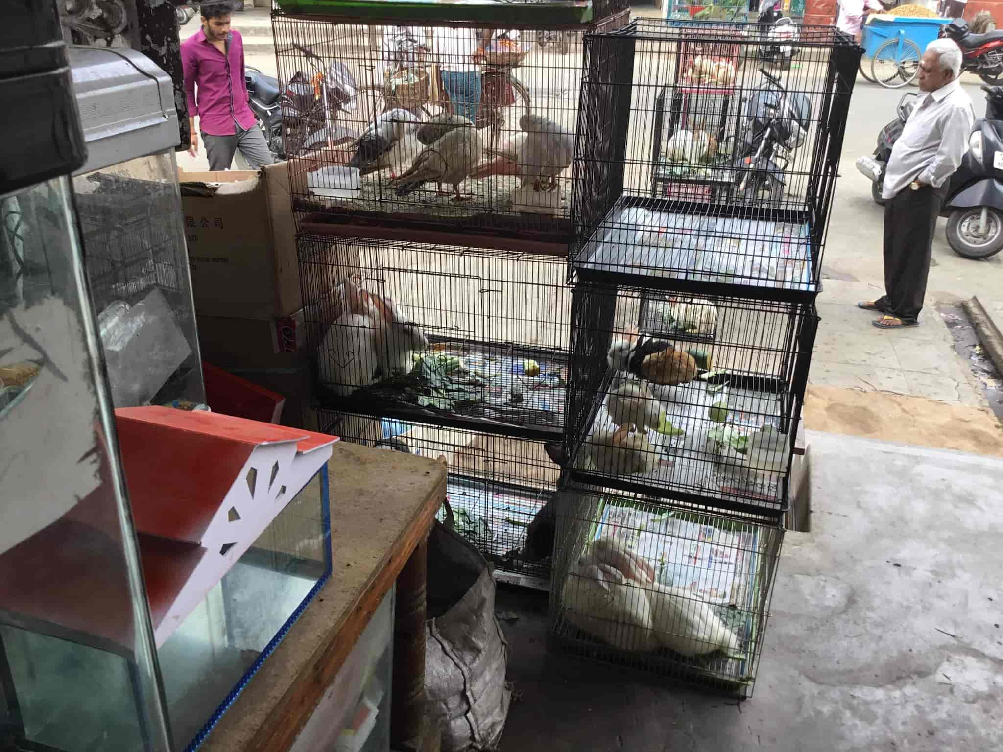 Marshalls Pet Zone, Danavaipeta - Pet Shops in Rajahmundry - Justdial