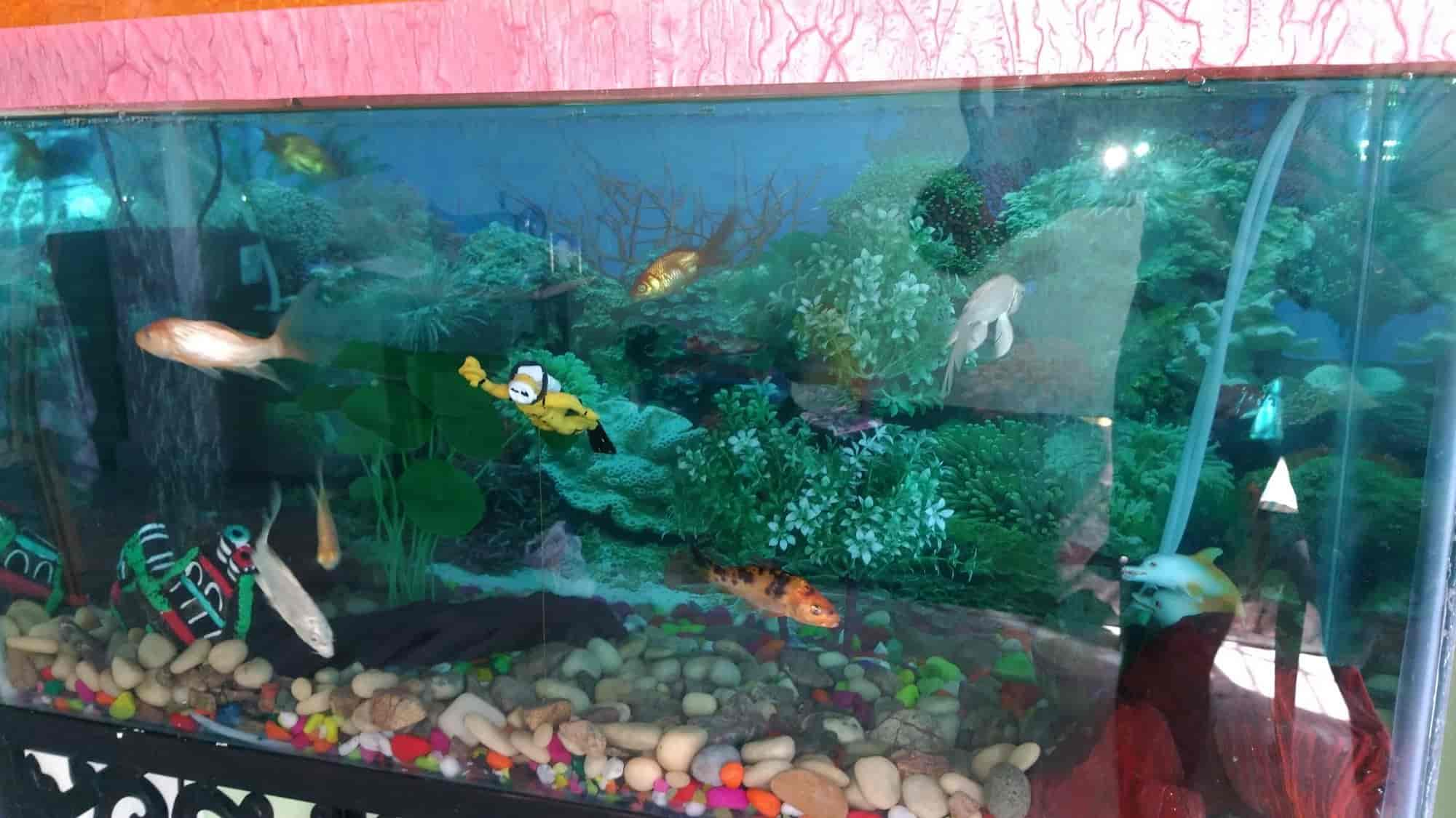 LUCY: Jalpari Fish