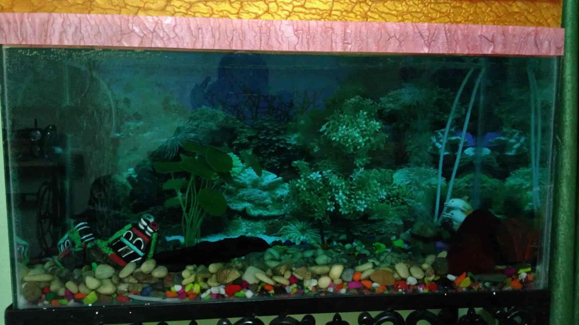 JANETTE: Jalpari Fish