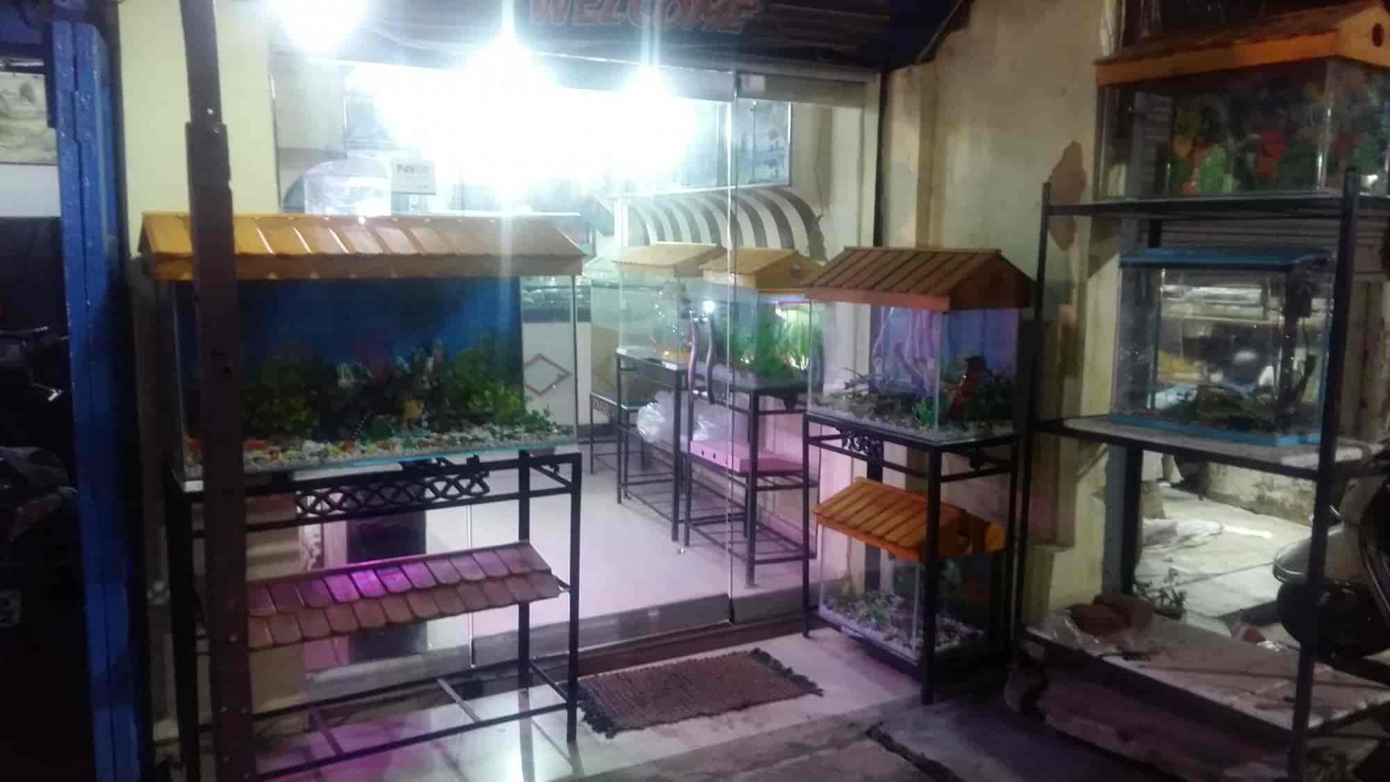 aquarium aqua gallery reviews main road ranchi 3 ratings justdial