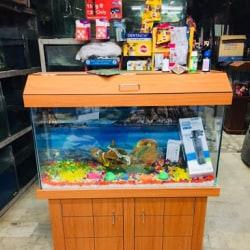 Shalimar Fish Aquarium Pet Shop Shalimar Garden Extention 2 Pet Shops In Sahibabad Delhi Justdial