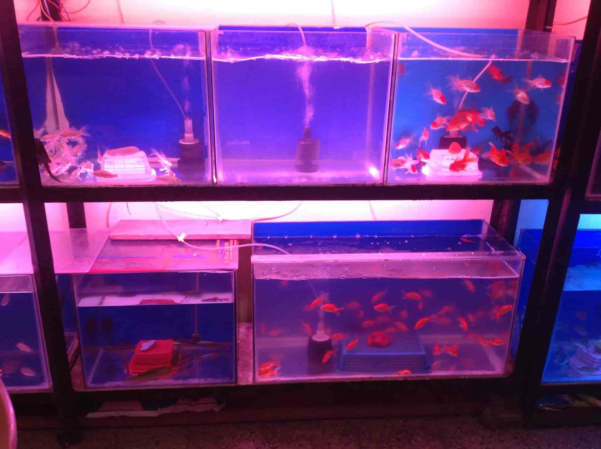 Silver Shark Fish Aquarium Love Birds Satara City Pet Shops In Satara Justdial