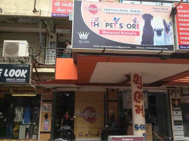 The Pet Store, Adajan Dn - Pet Shops in Surat - Justdial