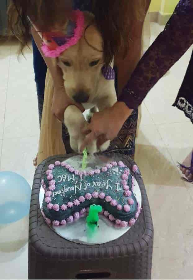Furbaby Pet Bakery Thane East