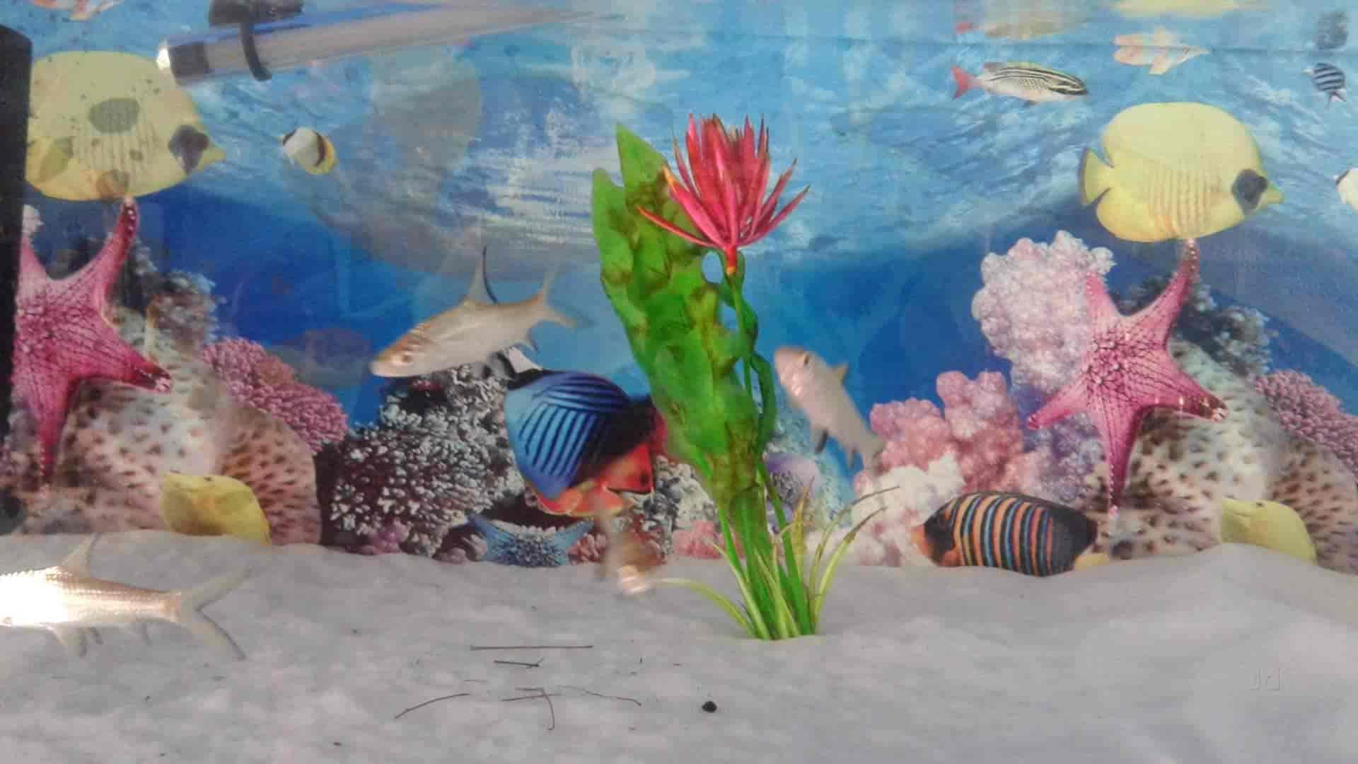 Irfoos Aquarium Erinjayam Aquariums In Thiruvananthapuram Justdial
