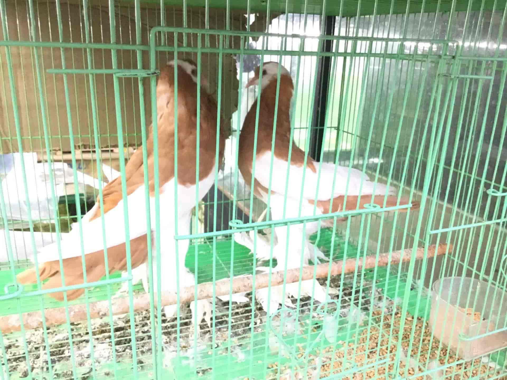 Joy Home Aquariams Pets Attingal Pet Shops In Thiruvananthapuram Justdial