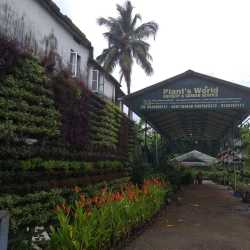 Plant S World Nursery Mannuthy Nurseries In