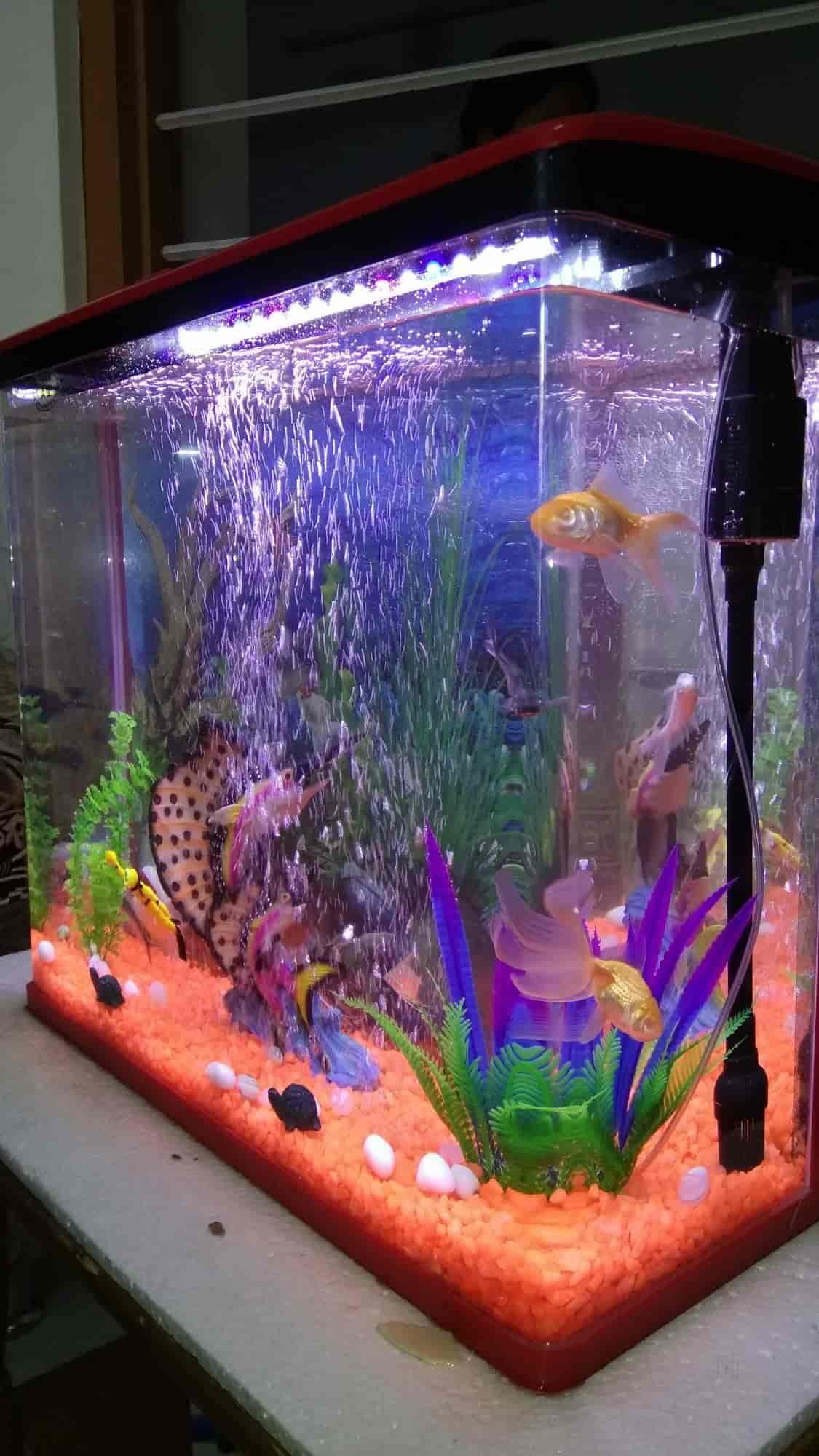 king fish aquarium udaipur city pet shops in udaipur rajasthan