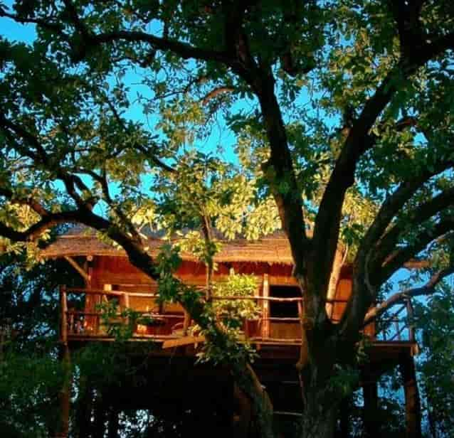 Image result for Tree House Hideaway – Bandhavgarh, Madhya Pradesh