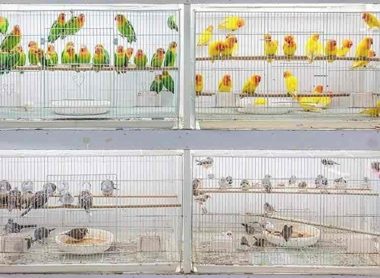 Pets Mart Clinic Madurai Reserve Lines Pet Shops In Madurai Justdial