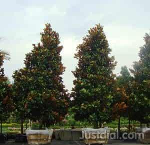 Tree Source Whole Nursery 6220 Elm St Houston Tx 77081 1of6